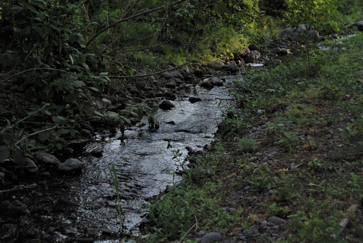creek in Comala