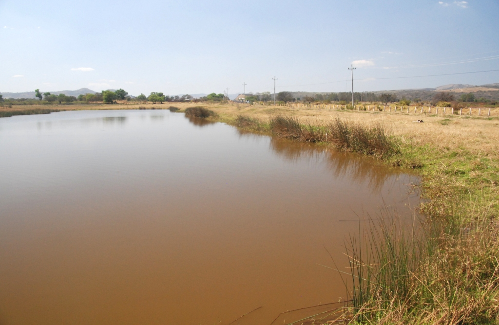 Pond near Palo Verde