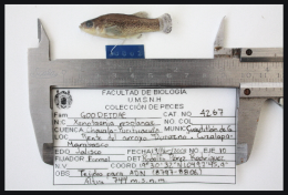 a male collected in 2008 with the corresponding tag